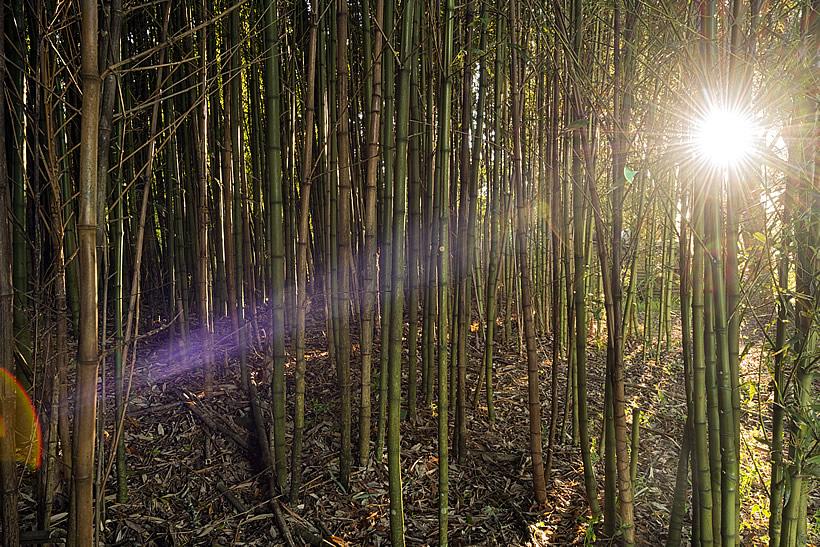 bamboo-garden[1]
